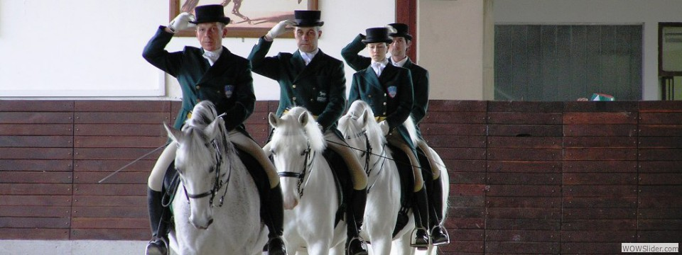 Lipazzaner Stallions